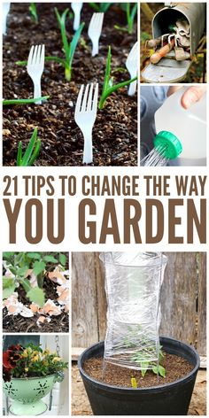Do you have a small or large backyard? Are you thinking about sprucing out your porch or patio? Well, container gardening is one of the best ways to keep your garden looking beautiful, regardless of the space. Try these container gardening tips for the. Garden Beds, Garden Plants, Shade Garden, Kid Garden, Organic Gardening Tips, Gardening Hacks, Bucket Gardening, Herb Gardening, Gardening Tools