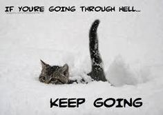 Image result for great inspirational kitten quotes