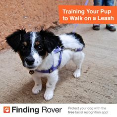 Training Your Pup to Walk on a Leash
