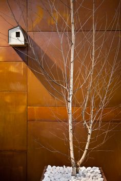 Corten Steal wall shows up the silver birch beautifully (check out the bird box!!!)