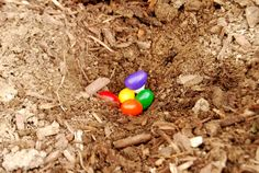 "Cutest Easter Tradition 1. Buy some ""magic"" Jelly Beans 2. Plant them in your yard- this only works the night before Easter (wink wink) 3. The next morning go out and see what grew (large Lollipops!)"