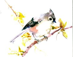 ARTFINDER: Titmouse Bird on the Spring tree by Suren Nersisyan - This is not a copy or print or watercolor from photo art ! The Artwork comes with Certificate of Authenticity. The painting is one of my original watercolor...