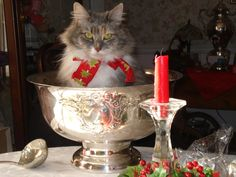 mostlycatsmostly (by CatherineMaynard) Christmas Kitten, Christmas Time, Paul Gray, Grey Cats, Punch Bowls, Centerpieces, Kitty, The Incredibles, Cute