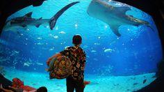 80 Ide Aquarium Design Villenave Dornon Terbaik Yang Bisa Anda Tiru