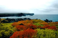 Floreana Island, Galapagos has such beautiful colors in December!