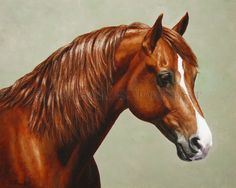 Oil painting of chestnut Morgan horse by equine artist Crista Forest, ForestStudios.com. Fine Art Prints available