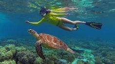 Swim with the turtles? Yes, you can in Apo Island. Book your stay in Apo Island Beach Resort and make this summer your best one yet! See this! Great Barrier Reef Tours, Snorkelling, Australia Travel, Queensland Australia, Marine Life, Beach Resorts, Cool Places To Visit, Fun Activities, Safari