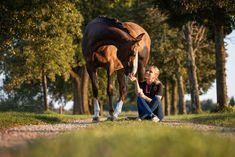Pferdefotografie - Du möchtest ein Fotoshooting mit deinem Pferd? Alle Infos zum Pferdeshooting findest du auf meiner Homepage www.michaela-steiner.at Michaela, Salzburg, Horses, Photography, Animals, Bayern, Photoshoot, Photograph, Animales