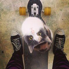 aawww cat is ready to longboard