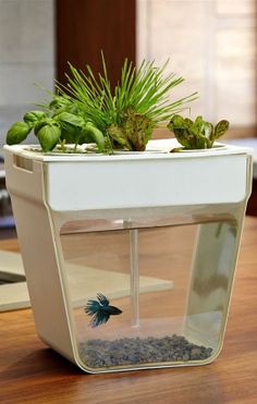 AquaFarm | self-cleaning fish tank that grows food!