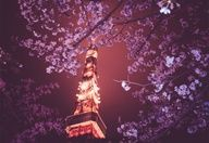 Tokyo Tower at Night - Easy Branches - Global Internet Marketing Network Company   SEO Expert