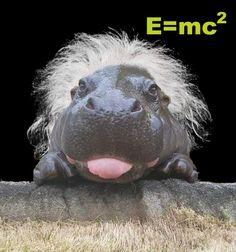 PsBattle: E=MC Haired