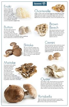 The Magical Nutrition of Cooked Mushrooms is part of Stuffed mushrooms - Who wouldn't savor scrumptious taste of mushroom dish Despite being fungus, it makes food fingerlicking! Learn about magical nutrition of cooked mushrooms! How To Cook Mushrooms, Edible Mushrooms, Stuffed Mushrooms, Mushroom Dish, Mushroom Recipes, King Oyster Mushroom Recipe, Mushroom Benefits, Health Benefits Of Mushrooms, Mushroom Varieties