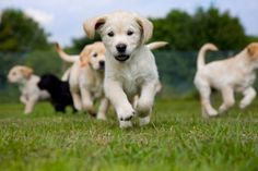 Here's Your Dose of Adorable for National Puppy Day Photos) - Suburban Men Youtube Dogs, Professional Dog Training, Pet Resort, National Puppy Day, Cute Dogs And Puppies, Adorable Puppies, Doggies, Dog Rules, Dog Boarding