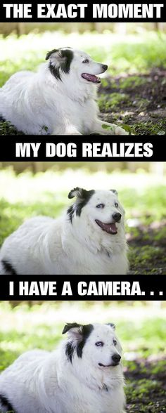 Omg this is my dog every time