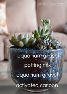 I need to have some potted succulents in the house