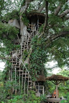 Solar Powered Tree House in Manuapen, Tafea Province, Vanuatu