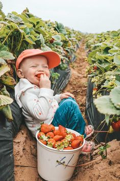r/pics - Took my kiddo to the strawberry farm, I think she liked it Strawberry Farm, Strawberry Picking, Cute Kids, Cute Babies, Future Farms, Foto Baby, Belle Photo, Baby Fever, Country Life