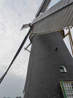 Anthony- of Poldersche Molen, Maasdam. Ronde stenen grondzeiler uit 1749. Heeft een vlucht van 28,60. Hij bemaalde de Anthoniepolder in de Hoekse Waard.