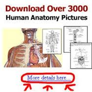Cpc study guide quizlet anatomy