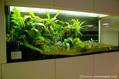 Corner Vivarium , Find Complete Details about Corner Vivarium,Vivarium from Other Pet Products Supplier or Manufacturer-Green Chapter Pte Ltd