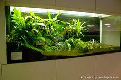 Green Chapter, Singapore Paludarium