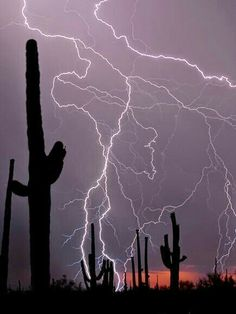 Desert Lightning Photograph by Pete Gregoire, My Shot Saguaro cacti stand in the desert as a thunderstorm rolls overhead. Lightning in dry areas increases the risk of brush fires. Lightning Cloud, Thunder And Lightning, Lightning Strikes, Lightning Storms, Lightning Flash, Natural Phenomena, Natural Disasters, All Nature, Amazing Nature