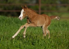 Foal out for a run, sweet little horse enjoying the day!