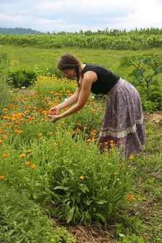 :: Giveaway for our Weekend Workshop on Cultivating Medicinal Herbs, May 16th-18th :: Winner receives one free admission to the workshop! Today is the last day to enter - Winner announced tomorrow *** Here's how you play: 1.Subscribe to our newsletter from our website's homepage. Note: If you are already subscribed to our newsletter move onto the next step. 2. Repin this post. 3. We hope you are inspired to follow our boards, but it's not required for entry.