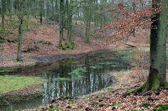 Het Solse gat near Boshuis drie, Veluwe, the Netherlands.