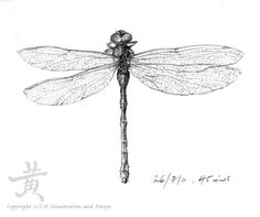 Sketches Of Dragonflies | Dragonfly sketch by Lil-el-art