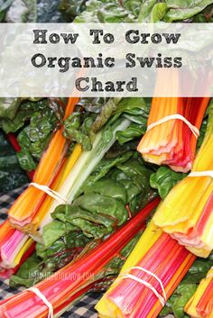 Spring Gardening is Coming!  Here is How To Grow Organic Swiss Chard In Your Garden