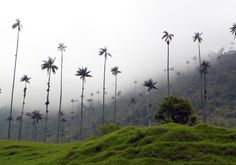The Cocora Valley and Salento Colombian Coffee, Travel Articles, The Crown, Wind Turbine, Maine, Trail, Around The Worlds, Stalls, Coffee Shops