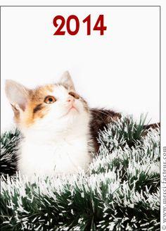 Carte Chaton qui regarde la nouvelle ann�e pour envoyer par La Poste, sur Merci-Facteur ! Cats, Nouvel An, Catalogue, Movie Posters, Animals, Html, Collection, Greeting Cards, Deck Of Cards