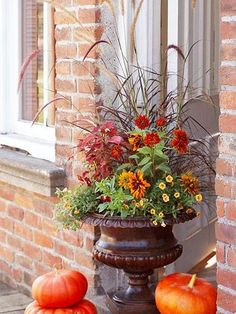Fall Container Garden idea - The proportions of this 2-foot-tall urn support the height of the purple fountaingrass, Pennisetum setaceum 'Rubrum'. Add more autumn color with red-leaf coleus (Solenostemon scutellarioides 'Sedona', upper left); the bronze-and-golden blooms of Rudbeckia hirta 'Cherokee Sunset', Calibrachoa 'Million Bells Terra Cotta' and 'Scarlet' pansies around the base. The brown grass Carex flagellifera 'Toffee Twist' fills out the right edge.