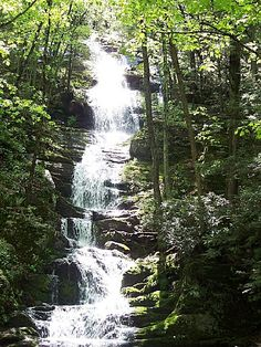 Stokes State Forest, a New Jersey forest located nearby Dover, East Stroudsburg and Hopatcong