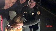 Cane scappa da casa per paura dei botti: salvato da guardie giurate e carabinieri - http://www.sostenitori.info/cane-scappa-casa-paura-dei-botti-salvato-guardie-giurate-carabinieri/274260