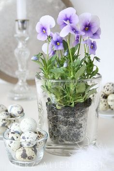 Plant pansies in transparent flower pots for a modern look. - Plant pansies in transparent flower pots for a modern look. Transparent Flowers, Deco Floral, Easter Table, Plantar, Pansies, Table Centerpieces, Spring Flowers, Purple Flowers, Exotic Flowers