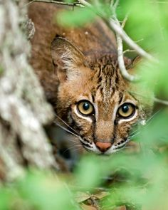 National Wildlife Refuge Association 2012 Photography Contest ...