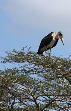 Kenya East African Rift, East African Community, Zanzibar Beaches, Kenya Travel, Tanzania Safari, Storks, Out Of Africa, African Safari, South Africa