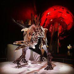 The new #stegosaurus #sophie #earthhall #naturalhistorymuseum #london (aliisalli/Instagram)
