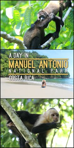 A day in Manuel Antonio National Park, Costa Rica. This is a great place to visit if you want to see wildlife, including birds, monkeys and sloths, as well as great beaches and exotic jungle.