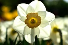 Spring light filtration - ©BillsPrintShop