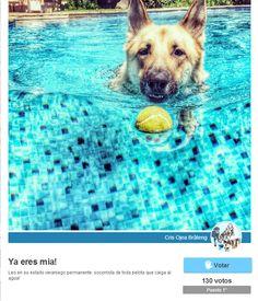 Nuestro Perro del Verano.  www.perros.es