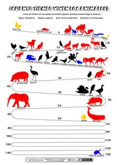 Spanish animal vocabulary ¿Cuánto tiempo viven los animales? Actividades de CM y matemáticas