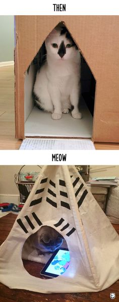 Then vs Meow: How Technology Has Changed Cats' Lives (10 Pics)