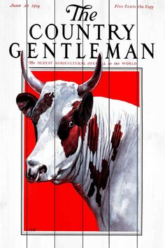 CG Bull Painting Print