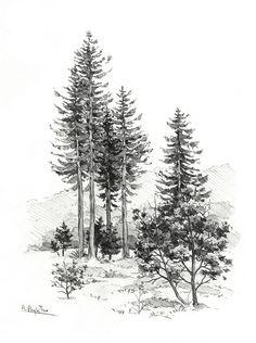 Tree/Ania Przybylko