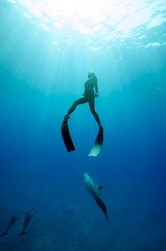 Freediving with Dolphins, Underwater Freediving Photography & Freedive Training in Hawaii