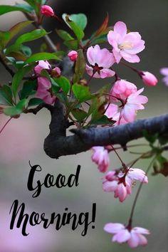 Morning Wish, Good Morning Images, Plants, Gud Morning Images, Good Morning Picture, Plant, Planets